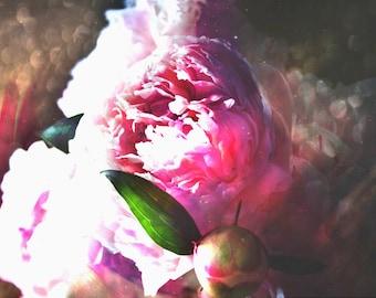 Peony print flower photography spring art nursery decor home decor wall art pink abstract decor peony art pink floral art FLORA