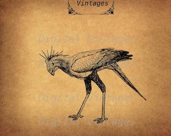 Secratary Bird Weird  Animal Royalty Free Illustration Vintage Antique Digital Image Download Printable Clip Art Prints 300dpi svg jpg png