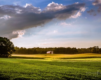 Forever Farmland- Photographic Print