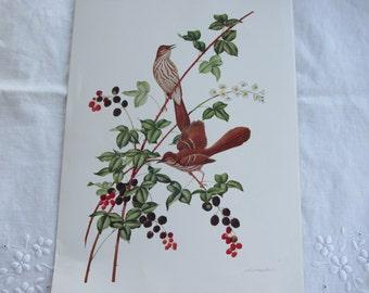 Botanical Print with Bird - Brown Thrasher - Athos Menaboni