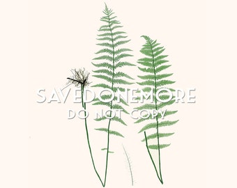 Vintage Botanical Fern Print Instant Download Make Your Own Art {Fern 29}