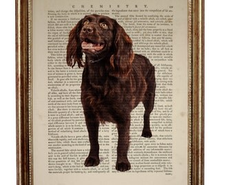 Boykin Spaniel Dog, beautiful Art Print on Upcycled Dictionary Book page 8'' x 10'' inches