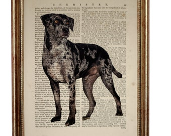 Catahoula Leopard Dog, beautiful Art Print on Upcycled Dictionary Book page 8'' x 10'' inches