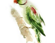 Parakeet Bird , Bird watercolor painting, Bird print Art print size 8X11 inch for room décor and special gift  No.284
