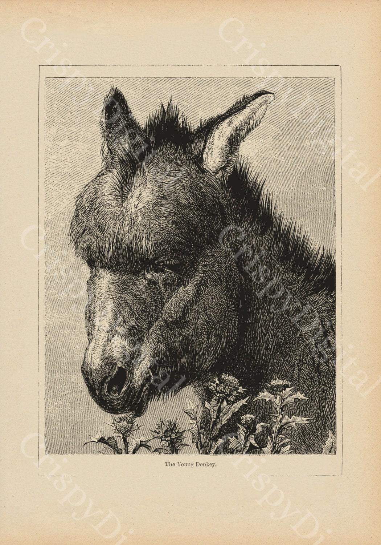 donkey wall art donkey print vintage donkey digital download