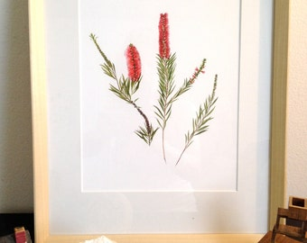 Weeping Bottle Brush-- Eagle Rock Boulevard, Los Angeles, CA (Watercolor Art Print)
