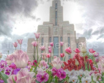 Oquirrh Mountain Temple Tulips