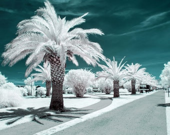 Infrared photography of landscape