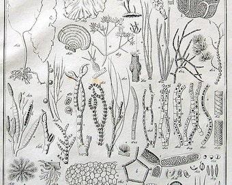 Plant Parts, Plant Cells, Plant Spores - Antique Botanical Print - 1848 Botanical Book Page - Black and White - Plate Number XXVI