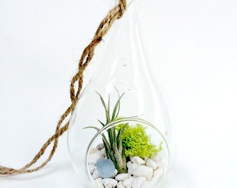 Teardrop Terrarium with Air Plant and Sea Glass