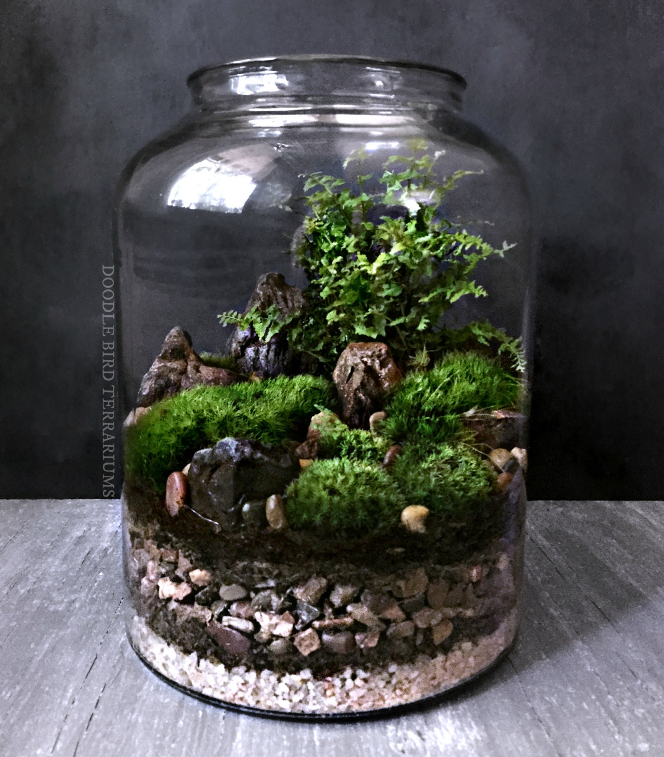 woodland moss and fern terrarium in large glass by doodlebirdie. Black Bedroom Furniture Sets. Home Design Ideas