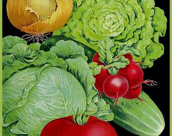 antique victorian botanical print onion lettuce radish cucomber cabbage illustration digital download