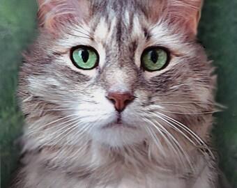 Custom Pet Portrait. 5 x 7 inch Cat Portrait. Framed. Acrylic on Canvas. Mounted on a Wood Panel.