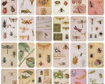 For the Young Entomologist, Drawings by L. Aristov. Complete Set of 32 Prints in original cover with descriptions on the back -- 1988