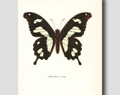 "Butterfly Decor, Butterfly Wall Art (Natural History, Cottage Print) Vintage Butterfly Print --- ""Ivory Coast Swallowtail"" No. 26-1"
