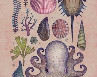 Aequoreus vita V / Marine life V - A4 art print