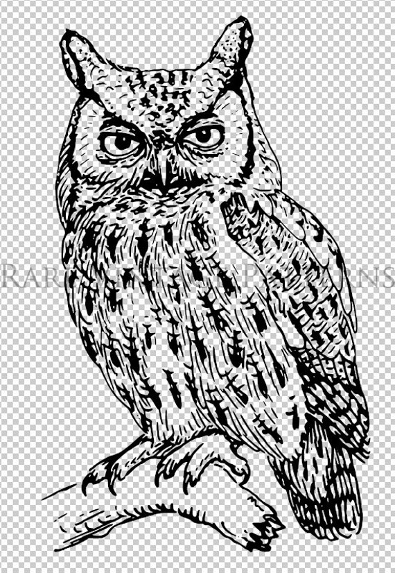 OWL BIRD STENCIL 5 X Files Png Jpg Pdf Transparent And