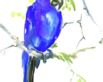 Hyacinth Macaw, parrot art original watercolor painting, 15 x 11 in, red bird art, pets