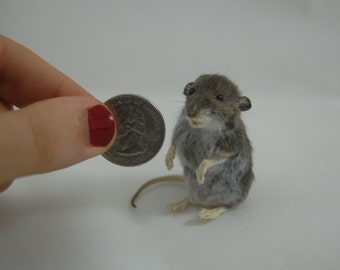 Taxidermy Field Mouse XS