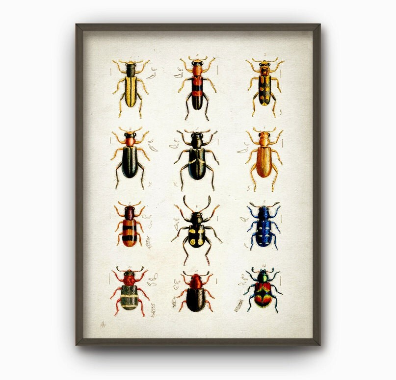 Antique Beetles Art Print Vintage Beetles Home Decor