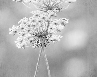 Queen Anne's Lace - Black and white photo print, flower photography, sophisticated, love, peaceful, elegant, botanical art print
