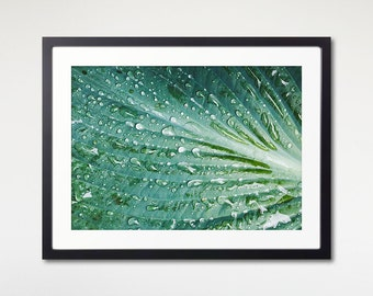 Leaf Raindrops Art, Framed Print, Green Texture, Macro Photography, 8x8 inches to 20x30 Print