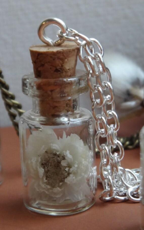 immortelle blanche fleur d 39 amiti flacon vivarium. Black Bedroom Furniture Sets. Home Design Ideas