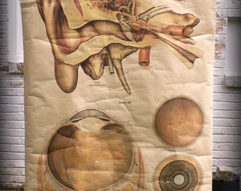 Vintage Wall Size Anatomical Chart - Ear and Eye - American Frohse, published 1918