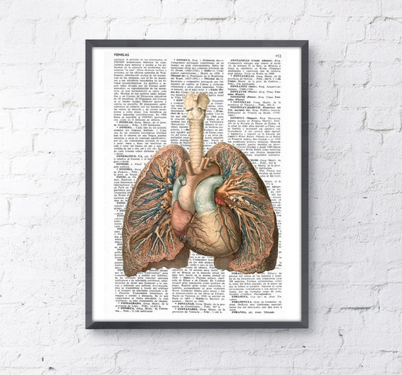 Spring Sale Lungs and heart human Anatomy Print - Anatomy art gift, human anatomy art, lungs and heart art BPSK102