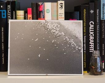 Seagulls – Analog, black and white, darkroom, photography, print