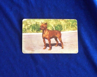 1950's Miniature Pinscher Dog Photo Hood Ice Cream Card Father's Day!