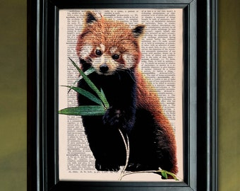 Dictionary Print: Red Panda eating Leaves, Vintage Illustration, Mixed Media, Wall Decor, Recycled Dictionary Paper ZRP9123