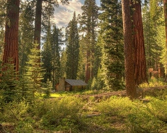 Sequoia trees, Yosemite National Park, California, Woods, Cabin, Landscape, Green, Yellow, Trees