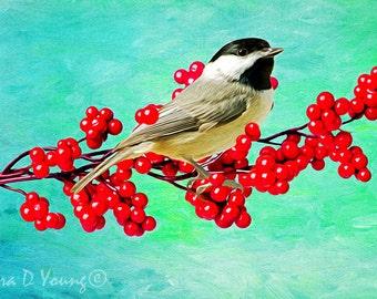 Chickadee Bird on Branch, Carolina Chickadee, Bird Wall Art, Bird Photography, Fine Art Photography, Red Holly Berries, Songbird Art Print