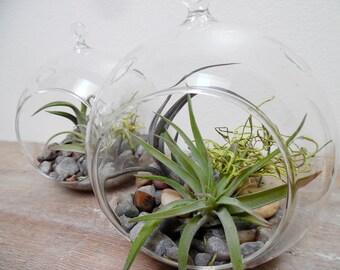 Hanging Globe Terrarium Kit - Air Plants - Build your own - Glass Tillandsia Globe - Orb Terrarium - Vertical Garden - Indoor Gardening