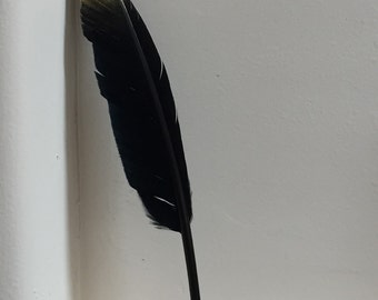 Gold Tipped Black Feathers