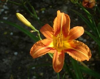 Orange flower, original photography: 20 x 30 cm