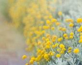 Summer yellow flowers. Art print, photography, print, postcard, yellow, flower, flowers, nature, nature, spring.