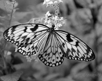 Butterfly Black and White Fine Art Photography Print - Insect Photography for Home Decor