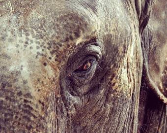Animal print Elephant decor Digital photography Instant download Photo printable Download photography Print poster Digital download art 2L
