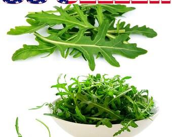 250+ ORGANIC Arugula Seeds Roquette Rocket Herb Heirloom NON-GMO Tasty Healthy