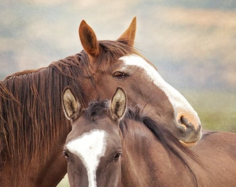 Wild horse art- 'Be Kind' Print, mounted and framed