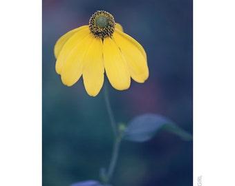 Nature Photography PRINT, Portrait of Rudbeckia - 1, Wall Art