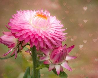 Pink Flower Photography, Bokeh Hearts Photograph, Print, Home, Wall Decor, Pink, Nursery