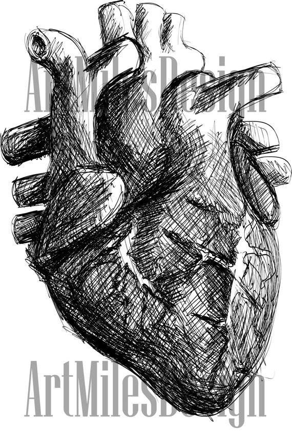 Line Drawing Human : Image gallery human heart line drawing