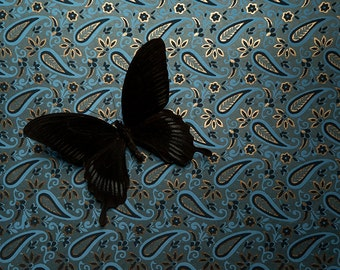 Photographic Print - Insectum Series - Insectum 2