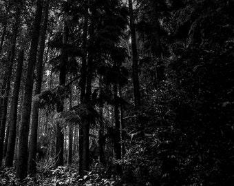 Where's Dino?, Dinosaurs, landscape photography, black and white, jurassic park, forest, dark, hidden, Jurassic forest, Alberta, trees
