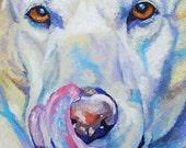 "Original Labrador Dog Oil Painting 12""x12"" pet potrait"