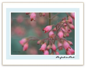 Photo Notecard, choose 1 - Flowers of your choice - print mounted on note card - nature photography art, valentines gift