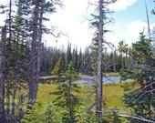 Mountain pond - origional photo